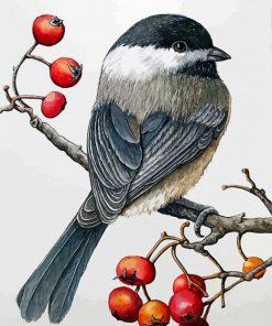 chickadee-bird-paint-by-number