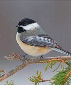 chickadee-paint-by-numbers
