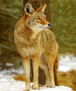 coyote-wolf-paint-by-number