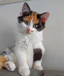cute-calico-cat-paint-by-numbers