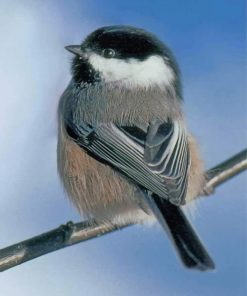 cute-chickadee-paint-by-numbers