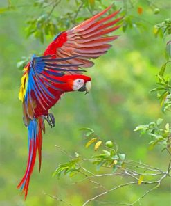 flying-macaws-paint-by-number