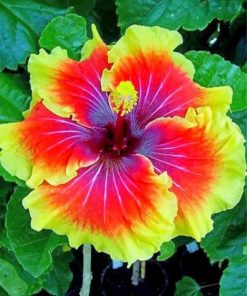 hibiscus-flower-paint-by-numbers