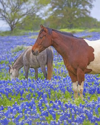 horses-and-bluebonnet-paint-by-numbers