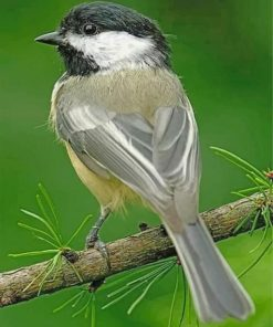 little-chickadee-bird-paint-by-number