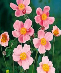 pink-anemone-paint-by-numbers
