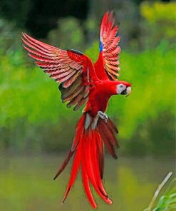 red-flying-macaws-paint-by-number