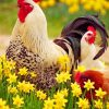 rooster-and-chicken-paint-by-number
