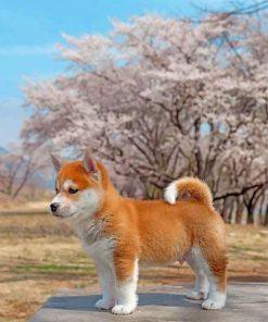 sakura-shiba-inu-dog-paint-by-numbers
