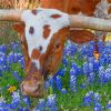 texas-longhorn-in-bluebonnets-paint-by-number