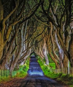 the-dark-hedges-of-northern-ireland-paint-by-numbers